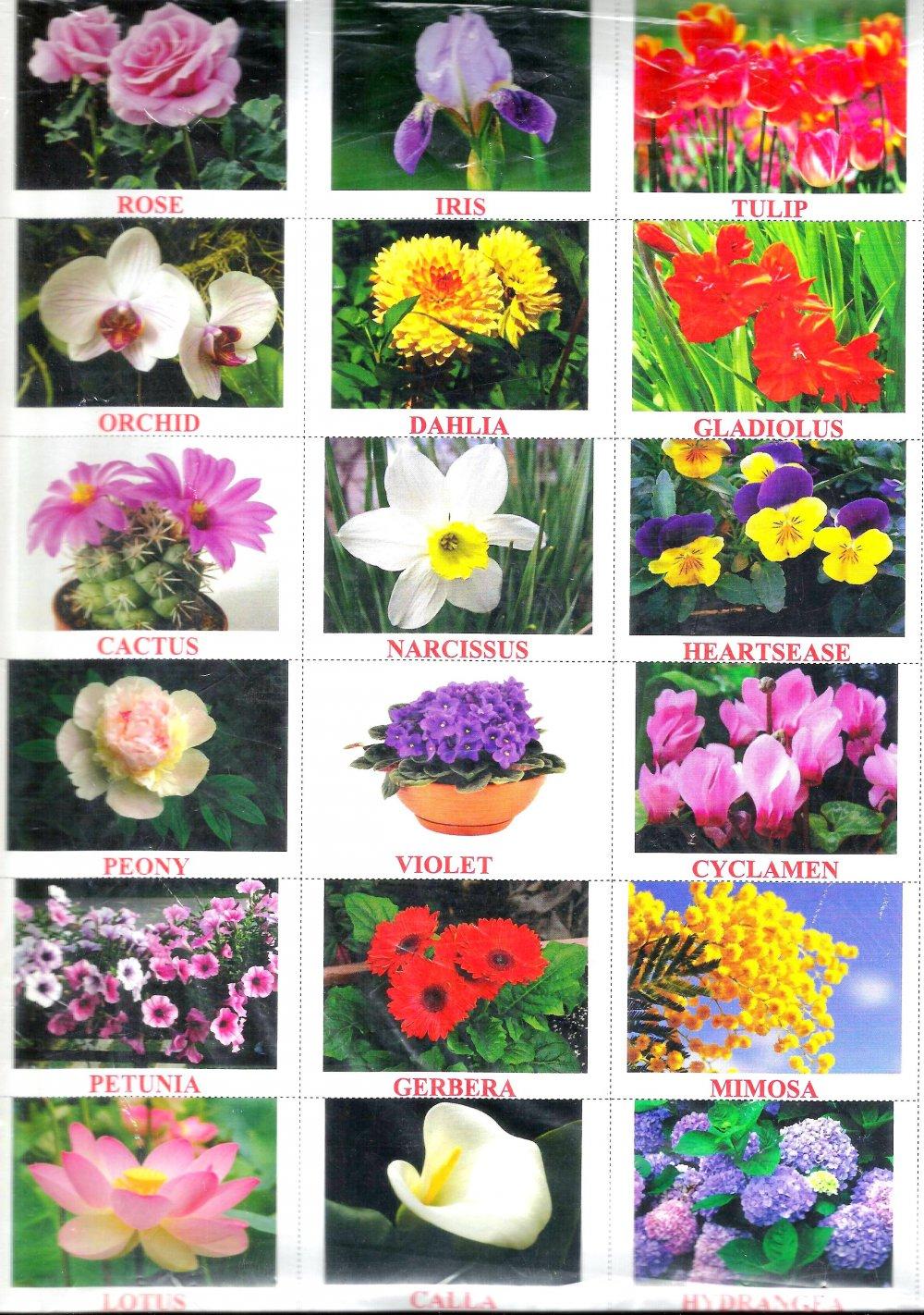 Названия цветков (растений) на английском языке
